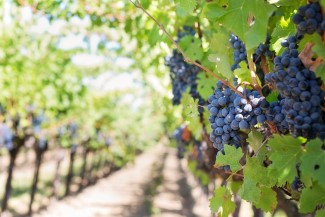 Southwestern Ontario Development Fund Awards Wineries Business Expansion Grants