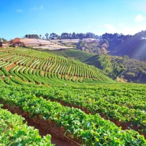 Funding for Agriculture, Food & Beverage Businesses