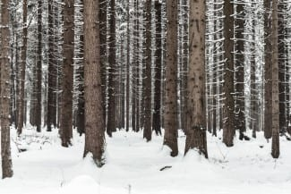 Upcoming Deadlines: Forest Sector Investment and Innovation Program